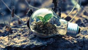 Sustainability in IT: make your contribution